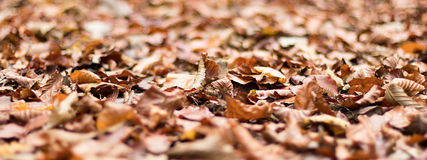 Autumn Leaves Fogliame di autunno Immagini Stock Libere da Diritti