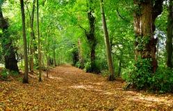Autumn Leaves. Footpath through the trees in Autumn stock photos
