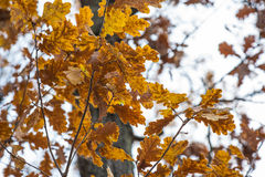Autumn leaves in forest Stock Photos
