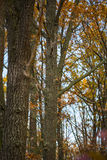 Autumn leaves in forest Stock Image