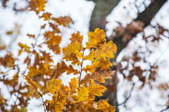 Autumn leaves in forest Royalty Free Stock Photos