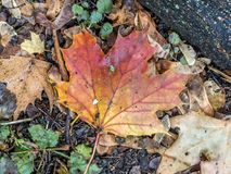 Autumn leaves forest floor Stock Photos