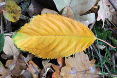 Autumn leaves on forest floor Stock Images