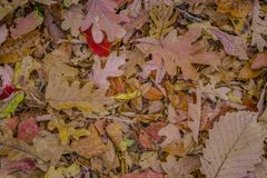 Autumn leaves on the forest floor stock image