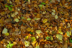 Autumn leaves on the forest floor in sunlight. Nature background Royalty Free Stock Image