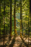 Autumn. Leaves in a forest in october Stock Images