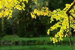 Autumn leaves in the forest stock images