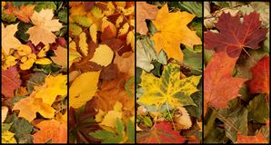Autumn leaves in forest. Royalty Free Stock Image