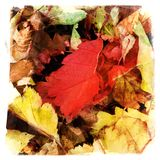 Autumn leaves form a soft carpet on the forest floor Royalty Free Stock Images