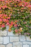 Autumn leaves on a fortress wall made of stones at Kalemegdan in Belgrade Stock Photos