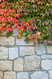 Autumn leaves on a fortress wall made of stones at Kalemegdan in Belgrade Royalty Free Stock Photo