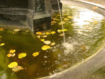 Autumn leaves in fountain. A small fountain in autumn with autumn leaves swimming on the water surface stock photos