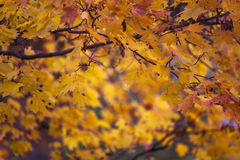 Autumn and leaves Stock Photography