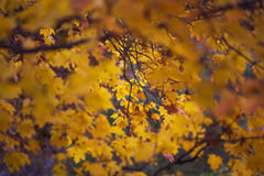 Autumn and leaves Royalty Free Stock Images