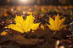 Autumn and leaves Royalty Free Stock Photo