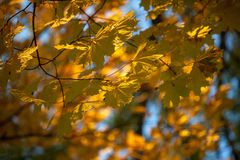 Autumn and leaves Stock Image