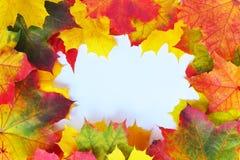 Autumn Leaves Frame Imagenes de archivo