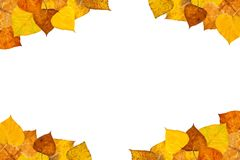 Autumn leaves frame. On white background Royalty Free Stock Photo