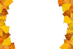 Autumn leaves frame. On white background Royalty Free Stock Images
