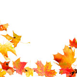 Autumn Leaves Frame. Falling autumn maple leaves isolated on white Stock Image