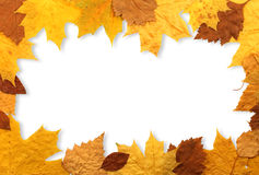 Autumn Leaves Frame Royalty Free Stock Photo
