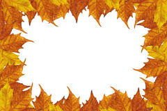 Autumn leaves frame. Autumn frame of maple leaves royalty free illustration