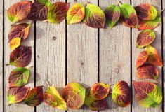 Autumn Leaves Frame stockfotos