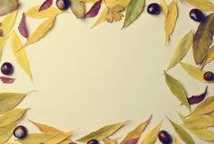 Autumn Leaves Frame photographie stock libre de droits