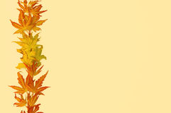 Autumn leaves frame Royalty Free Stock Photography