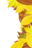 Autumn leaves frame Stock Photos