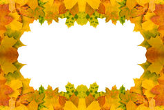Autumn leaves frame. On white background Stock Images