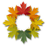 Autumn-Leaves-Frame Royalty Free Stock Photos