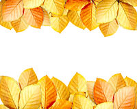 Autumn leaves frame. Celebration card Stock Photography