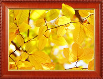 Autumn leaves in frame Royalty Free Stock Photo