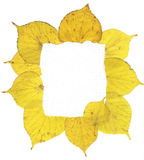 Autumn Leaves Frame Royalty Free Stock Images