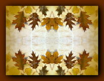 Autumn Leaves Frame Lizenzfreie Stockfotografie