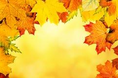 Autumn Leaves Frame Foto de archivo