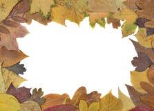 Autumn Leaves Frame Lizenzfreie Stockfotografie
