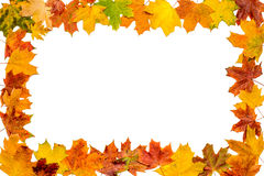 Autumn Leaves Frame Images libres de droits