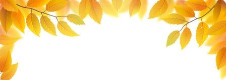 Autumn Leaves Frame Images libres de droits