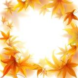 Autumn Leaves Frame Photo libre de droits