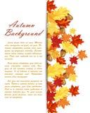 Autumn Leaves Frame Imagen de archivo