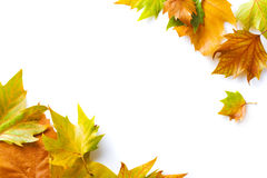 Free Autumn Leaves Frame Stock Images - 6690644