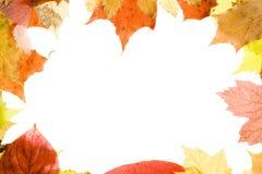 Autumn Leaves frame Stock Photos