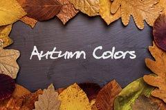 Autumn Leaves Frame auf dunklem Steinhintergrund Autumn Colors Concept Wallpaper Stockfotografie