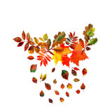 Autumn leaves frame beautiful bright Royalty Free Stock Photos
