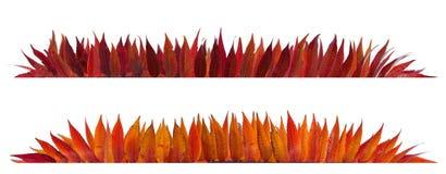 Autumn leaves frame Royalty Free Stock Photo