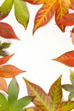 Autumn leaves frame Stock Photo