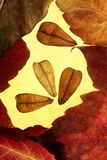 Autumn leaves in frame composition,. Golden transparent royalty free stock photography