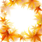 Autumn leaves frame. Autumn frame with falling maple leaves on white background Royalty Free Stock Photo